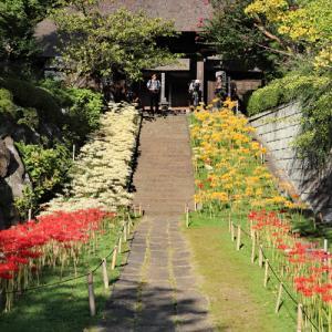 彼岸花咲く 西方寺