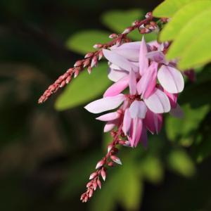 鎌倉大巧寺 初冬の花