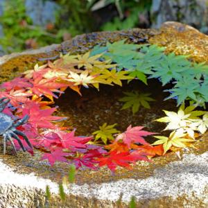 鎌倉一条恵観山荘 紅葉手水鉢