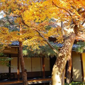 紅葉の一条恵観山荘