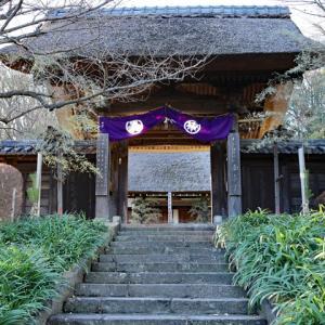 蝋梅咲く 西方寺
