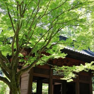 新緑の鎌倉妙本寺