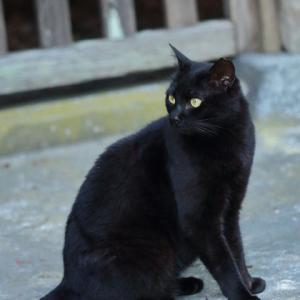 黒猫 @妙本寺