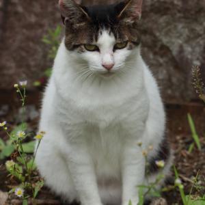 サバトラ白猫 @東高根森林公園
