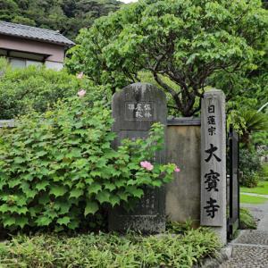 芙蓉咲く 鎌倉大宝寺