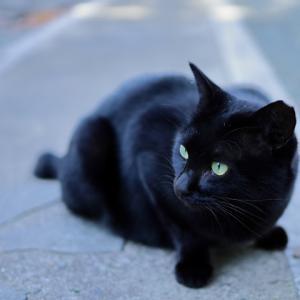 鎌倉妙本寺 黒猫
