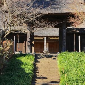 ロウバイ咲く 西方寺