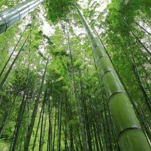 鎌倉報国寺 竹の庭