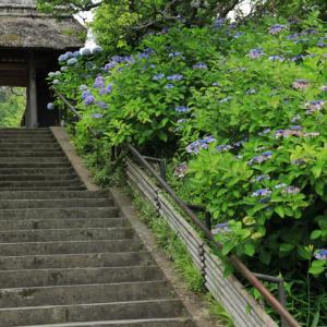 紫陽花咲く 鎌倉東慶寺