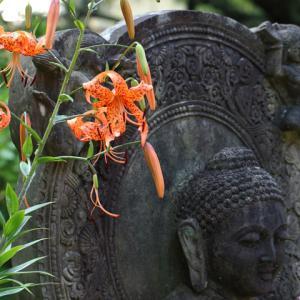 鬼百合咲く 鎌倉安国論寺