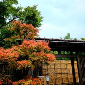祐徳稲荷神社 日本庭園
