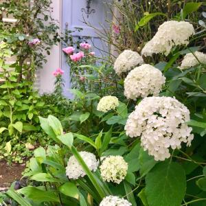 玄関前の植え込みを夏花壇に