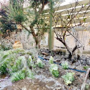 庭が氷漬けに。。。スプリンクラーの誤作動。