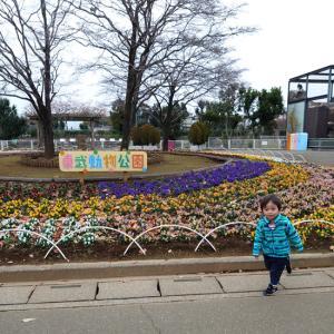 東武動物公園のイルミネーション♪