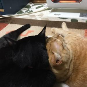 頭突き猫、なごみ猫