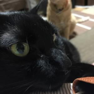 黒猫どっかり
