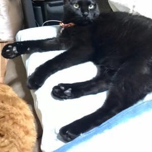 このお布団は黒猫が占拠した!