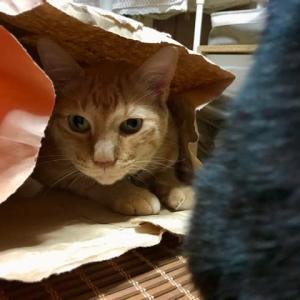 黒猫さんは紙袋に入ってみたい