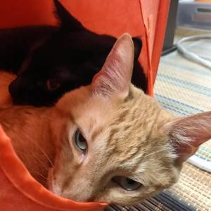 秋の気配だ、猫団子!