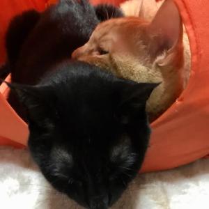 猫の予防接種に行ってきた!