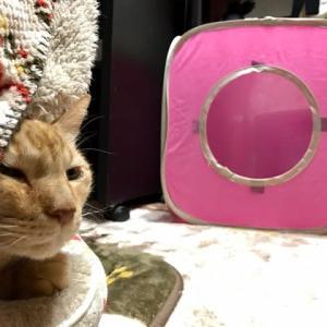 新猫テントが届いた!
