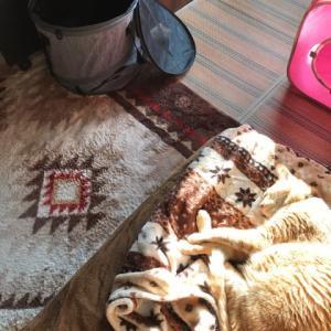 日向と日陰でお昼寝猫