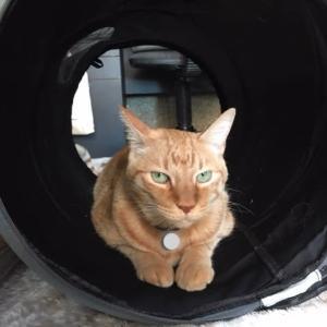 猫トンネルの主