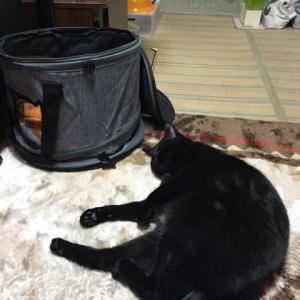 部屋の真ん中で寝る黒猫