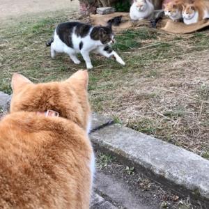外猫、家猫…温室猫?