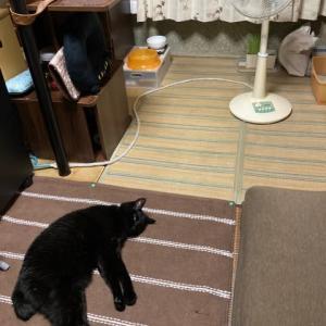 今夜も黒猫落ちてます