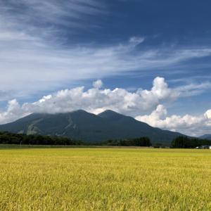米どころ会津 金色の田園
