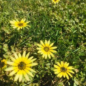 花粉症と学び
