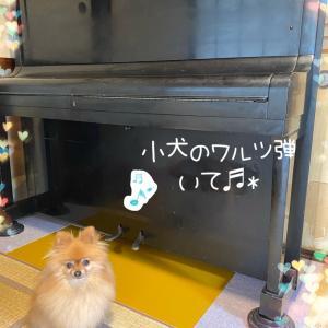 ピアノが来たぁー♪