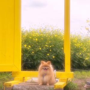 秋の公園散歩♪