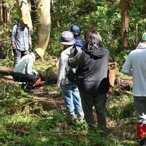 森のボランティア~台風後の片付け