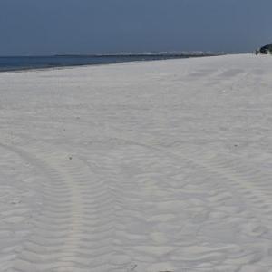 稲毛の浜、コスモスと蝶、10km走