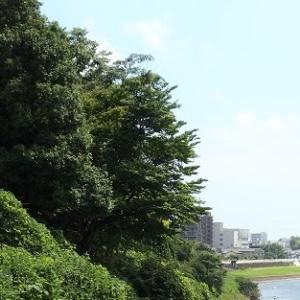 広瀬川パトロール2020