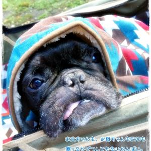 スットボケは毛布ラブ