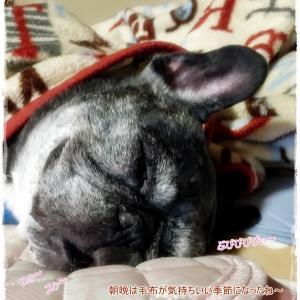 毛布の季節でホラー寝