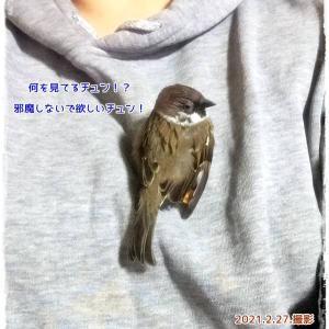 チュン太郎物語★22