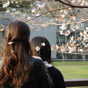 ・今年の桜〜その3〜