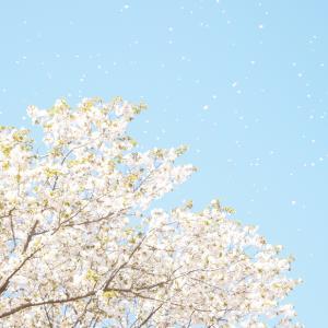 ・今年の桜〜その4〜