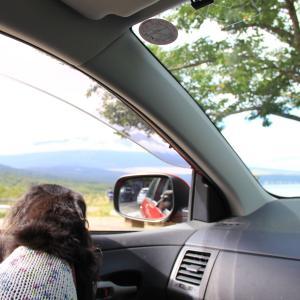 山中湖『パノラマ台』でひとやすみ ヘU^ェ^U ヘU^ェ^U ヘU^ェ^U ワンワンワン♪