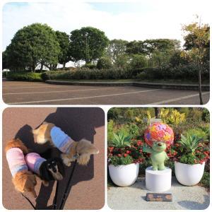 バラ咲く港の見える丘公園をお散歩 ヘU^ェ^U ヘU^ェ^U ヘU^ェ^U ワンワンワン♪