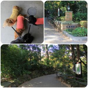 秋色の横浜公園をお散歩 ヘU^ェ^U ヘU^ェ^U ヘU^ェ^U ワンワンワン♪