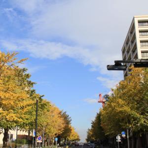 秋色の日本大通りをお散歩 ヘU^ェ^U ヘU^ェ^U ヘU^ェ^U ワンワンワン♪