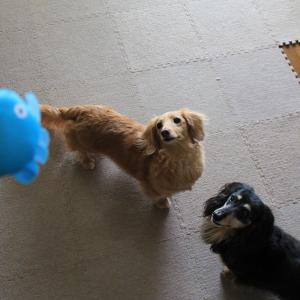 新しいおもちゃで遊んだよ 。.:*.゜☆(●´∀`●)ニコ.゜☆.。.:*.゜