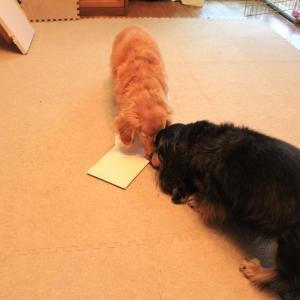 レビュープレゼントと予約案内書が届いたよ 。.:*.゜☆(●´∀`●)ニコ.゜☆.。.:*.゜