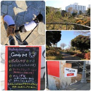 横浜市中区『Candy・Pot』さんで初めてのドッグマッサージ 。.:*.゜☆(●´∀`●)ニコ.゜☆.。.:*.゜