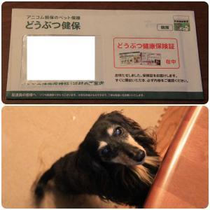アニコムさんからプラン変更後の保険証が届いたよo(*^▽^*)o